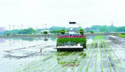 オート田植機YR8D,Aによる密苗植付作業